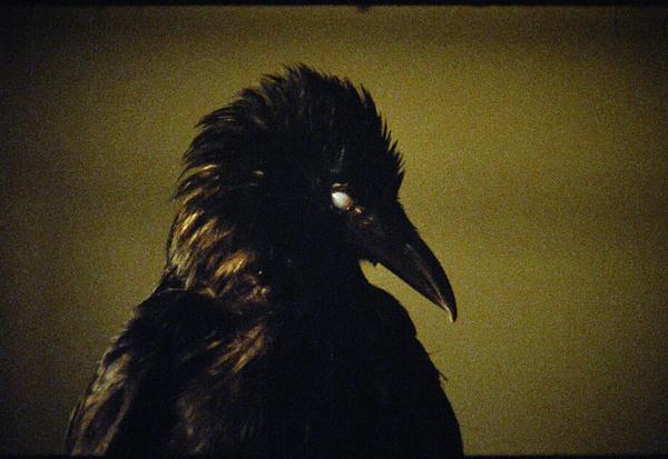 The Bird Game